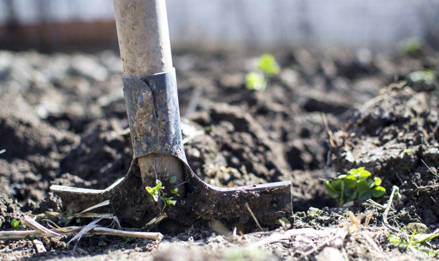 Quelles sont les légumes à planter en mai ?